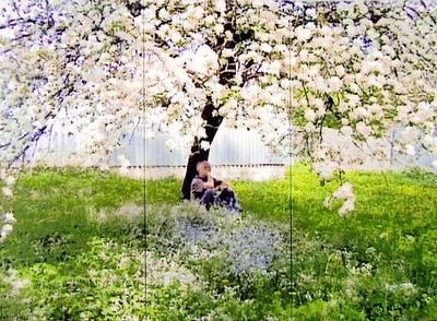 Cornelius Kolig, Apfelblüte